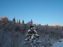Vista sulle colline durante del il inverno ricco di neve Immagine Stock Libera da Diritti