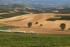 Vista sulle vigne e sui campi in Italia del Nord. Fotografia Stock Libera da Diritti