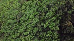 Vista superior aérea de la selva tropical desde arriba almacen de metraje de vídeo