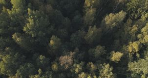Vista superior aérea de los árboles del otoño en bosque en septiembre Foto de archivo libre de regalías