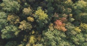 Vista superior aérea de los árboles del otoño en bosque en septiembre Imagenes de archivo