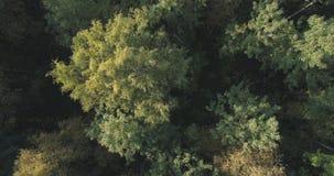 Vista superior aérea de los árboles del otoño en bosque en septiembre Fotos de archivo libres de regalías