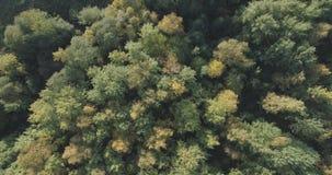 Vista superior aérea de los árboles del otoño en bosque en septiembre Imagen de archivo libre de regalías