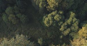 Vista superior aérea de los árboles del otoño en bosque en septiembre Foto de archivo