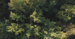 Vista superior aérea de los árboles del otoño en bosque en septiembre Imagen de archivo
