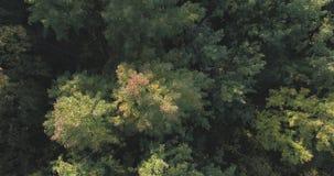 Vista superior aérea de los árboles del otoño en parque salvaje en septiembre Imagen de archivo