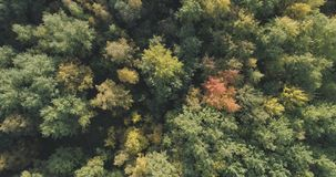 Vista superior aérea de los árboles del otoño en parque salvaje en septiembre Fotografía de archivo