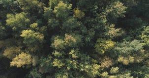 Vista superior aérea de los árboles del otoño en parque salvaje en septiembre Fotografía de archivo libre de regalías