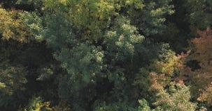 Vista superior aérea de los árboles del otoño en parque salvaje en septiembre Imagenes de archivo