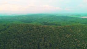 Vista superior aérea de los árboles verdes del verano en fondo del bosque y de las montañas 4K almacen de metraje de vídeo