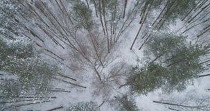 Vista superior aérea del bosque del pino en un día de invierno Fotos de archivo libres de regalías