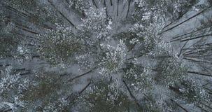Vista superior aérea del bosque del pino en un día de invierno Imagen de archivo