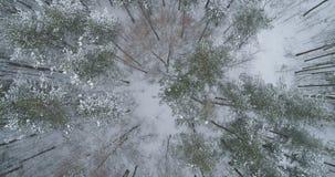 Vista superior aérea del bosque del pino en un día de invierno Fotografía de archivo libre de regalías