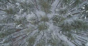 Vista superior aérea del bosque del pino en un día de invierno Fotografía de archivo