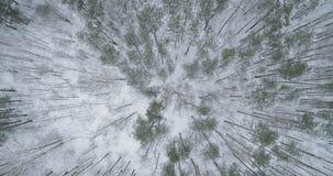 Vista superior aérea del bosque del pino en un día de invierno Imagen de archivo libre de regalías