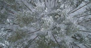 Vista superior aérea del bosque del pino en un día de invierno Imágenes de archivo libres de regalías