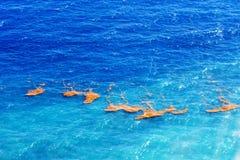 Vista superior bonita: mar das caraíbas de turquesa nos raios do sol Algas no meio do oceano imagens de stock
