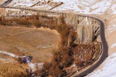 Vista superior da estrada preta curvada ao lado com o cacho do álamo foto de stock