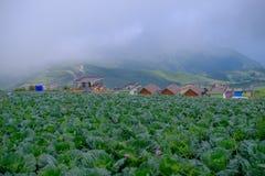 Vista superior da exploração agrícola da couve de casas da vila entre árvores verdes em montanhas Fotos de Stock
