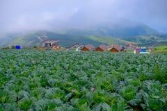 Vista superior da exploração agrícola da couve de casas da vila entre árvores verdes em montanhas Imagens de Stock Royalty Free