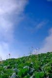 Vista superior da exploração agrícola da couve de casas da vila entre árvores verdes em montanhas Imagem de Stock