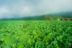 Vista superior da exploração agrícola da couve de casas da vila entre árvores verdes em montanhas Imagens de Stock