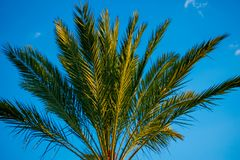 Vista superior da palmeira no fundo do c?u do lighblue na ?rea internacional da movimenta??o imagem de stock