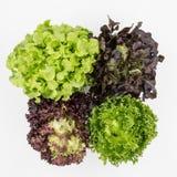 A vista superior da salada da mistura deixa o fundo Fotografia de Stock Royalty Free