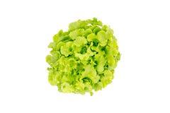 A vista superior da salada sae, carvalho verde Foto de Stock