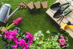 vista superior das flores e do equipamento de jardinagem arranjado na grama Imagem de Stock