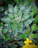 Vista superior das folhas Imagem de Stock