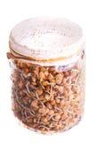 Vista superior das lentilhas emergentes que crescem em um frasco Imagem de Stock
