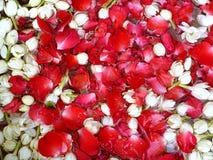 Vista superior das p?talas cor-de-rosa e das flores do jasmim que flutuam na ?gua como um fundo foto de stock