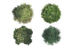 Vista superior das árvores Imagens de Stock Royalty Free