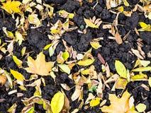 vista superior das várias folhas caídas na terra arada foto de stock