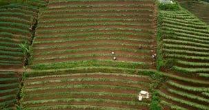 Vista superior de campos colgantes enormes almacen de metraje de vídeo