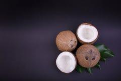 Vista superior de cocos tropicais com folhas verdes Porcas orgânicas e nutritivos Todo e cocos cortados com folhas, close-up Imagem de Stock