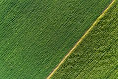 Vista superior de filas diagonales verdes de cosechas en campo Fotografía de archivo