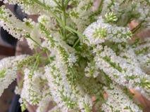 Vista superior de flores brancas pequenas bonitos no vaso na tabela de madeira foto de stock royalty free