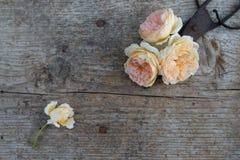 Vista superior de flores y de tijeras viejas en piso de madera Fotos de archivo libres de regalías