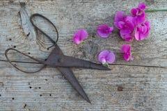 Vista superior de flores y de tijeras viejas en piso de madera Fotografía de archivo libre de regalías