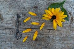 Vista superior de flores y vieja llave en piso de madera Imágenes de archivo libres de regalías