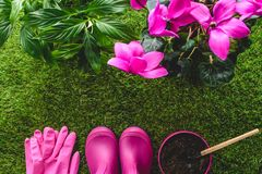 vista superior de guantes protectores, de las botas de goma, de la maceta con el rastrillo de la mano y de flores en hierba foto de archivo libre de regalías
