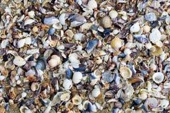 Vista superior de la arena y de las ventas de la playa para el fondo y la textura Concepto del fondo del verano Imágenes de archivo libres de regalías