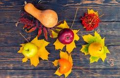 Vista superior de la cosecha de manzanas, de la pera, del serbal, de la calabaza y del persimmo Fotos de archivo