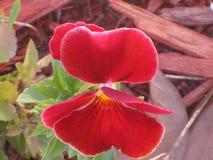 Vista superior de la flor fotografía de archivo libre de regalías