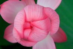 Vista superior de la flor de loto Foto de archivo