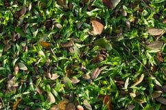 Vista superior de la hierba y de las hojas Fotos de archivo libres de regalías