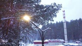 Vista superior de la lámpara de calle en el fondo del bosque en nieve clip Hermosa vista de la nieve que cae iluminada por la lám almacen de video