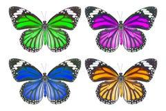 Vista superior de la mariposa común del tigre y de x28; Genutia del Danaus y x29; en blanco fotografía de archivo